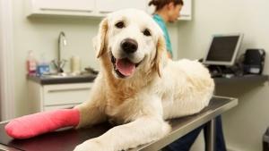 seguros-para-perros